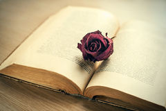 Open old book with dried maroon rose bud. Stock Images