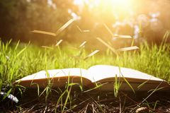 open old book with flying pages over green spring grass in forest at sun light. Royalty Free Stock Photography