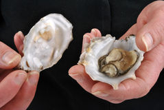 Open one organic and fresh oyster Stock Images