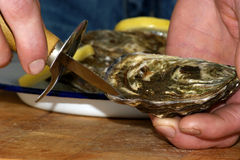 open one raw organic oyster Royalty Free Stock Photos