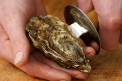 Open one raw organic oyster Royalty Free Stock Image