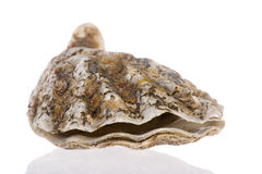 Open oyster Royalty Free Stock Photography