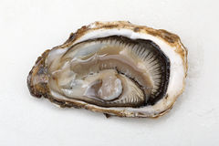 Open Oyster Royalty Free Stock Image