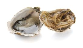 An open oyster and a closed oyster. On a white background stock images