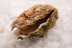 Open oyster on ice Royalty Free Stock Photography