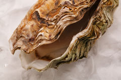 Open oyster on ice Royalty Free Stock Images