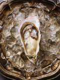 Open Oyster with ice Royalty Free Stock Images