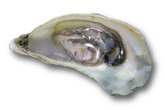 Open oyster isolated on a white background Stock Images