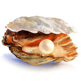 Open oyster shell with beautiful white pearl isolated, watercolor illustration Stock Photography