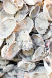 Open Oyster Shells With Rope. Stock Photo
