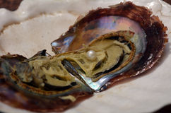 Open oyster with white pink pearl Stock Photography