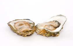 Open oysters Stock Images