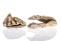 Open oysters Royalty Free Stock Photography