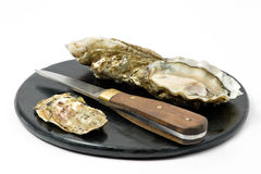 Open oysters. On plate. Oyster knife Stock Images