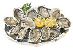 Oysters on silver tray Royalty Free Stock Photos