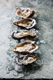 Open Oysters with ice Stock Photography