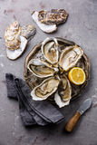 Open Oysters with ice and lemon Royalty Free Stock Photography