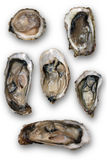 Open oysters isolated on a white background Royalty Free Stock Photo