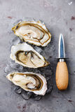 Open oysters and knife. Open oysters on ice and knife on gray concrete texture background stock photography