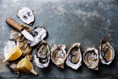 Open Oysters with lemon Royalty Free Stock Photo