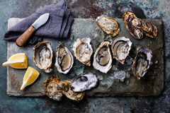 Open Oysters with lemon. Open Oysters Fines de Claire on stone plate with lemon Royalty Free Stock Photo