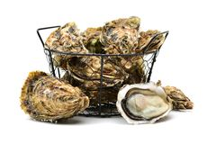 Open oysters. Studio  on white background Royalty Free Stock Images