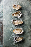 Open Oysters on stone plate with ice Stock Images