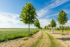 Open path on a sunny day stock photography