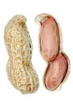 Open peanut Stock Photography