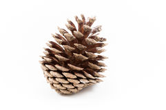 An open pine cone sprinkled with snow on a white background. An open pine cone sprinkled with a touch of snow on a white background in the winter season stock photos