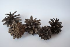 Open pine cones macro. Open pine cones on a white background macro beautiful view from aboven natural material for needlework stock photos
