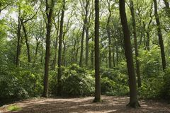 Open plaats in park Stock Foto's