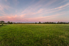 Open plek bij zonsondergang stock foto's