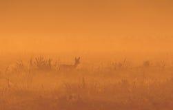 Open plek in de boszonsopgang Het lopen van een klein hert royalty-vrije stock foto's