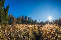 Open plek in de herfstbos bij zonsondergang in Tsjechische Republiek royalty-vrije stock foto's