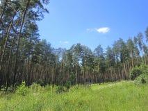 Open plek in het bos Stock Afbeeldingen