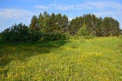 Open plek met bloemen, de koele schaduw van de bomen een hete de zomerdag Stock Foto's