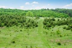 Open plek met jonge pijnbomen Stock Foto