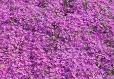 Open plek met roze bloemen die op het groeien stock foto