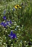 Open plek van bloemen Royalty-vrije Stock Afbeelding