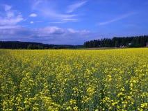 Open plek van gele bloemen Royalty-vrije Stock Afbeelding