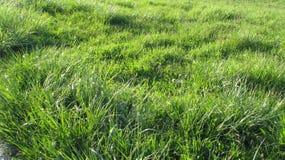 Open plek van sappig groen gras stock afbeelding