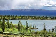 Open plekken van polair gebied in de lente stock foto