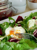 Open poached egg on a green salad and pieces of beetroot. Close-up. Restaurant dish Royalty Free Stock Photography