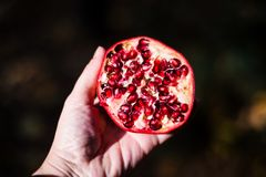 Open pomegranate in a hand. Autumn light Royalty Free Stock Images