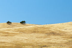 Open range grassy hillside. Golden dried grass on open range country hillside Stock Photo