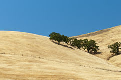 Open range grassy hillside. Golden dried grass on open range country hillside Stock Photos