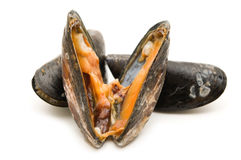 Open raw mussel Royalty Free Stock Image