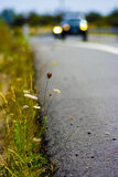 Open road. Car in a road with grass and daisies royalty free stock photos