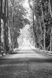 The open road. The beautiful road in black white Royalty Free Stock Image